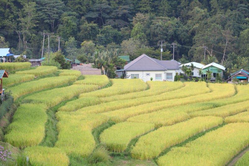 Страна, где есть рисовые поля, это шаги Зеленые и желтые на высоких горах стоковое изображение