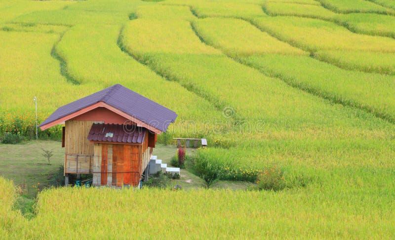 Страна, где есть рисовые поля, это шаги Зеленые и желтые на высоких горах стоковые изображения rf