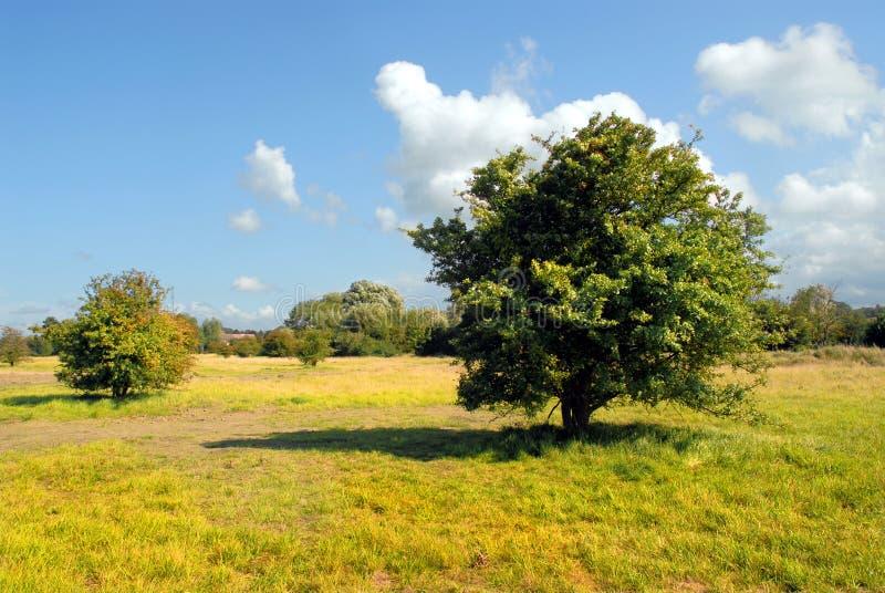 страна Нормандия стоковое фото rf