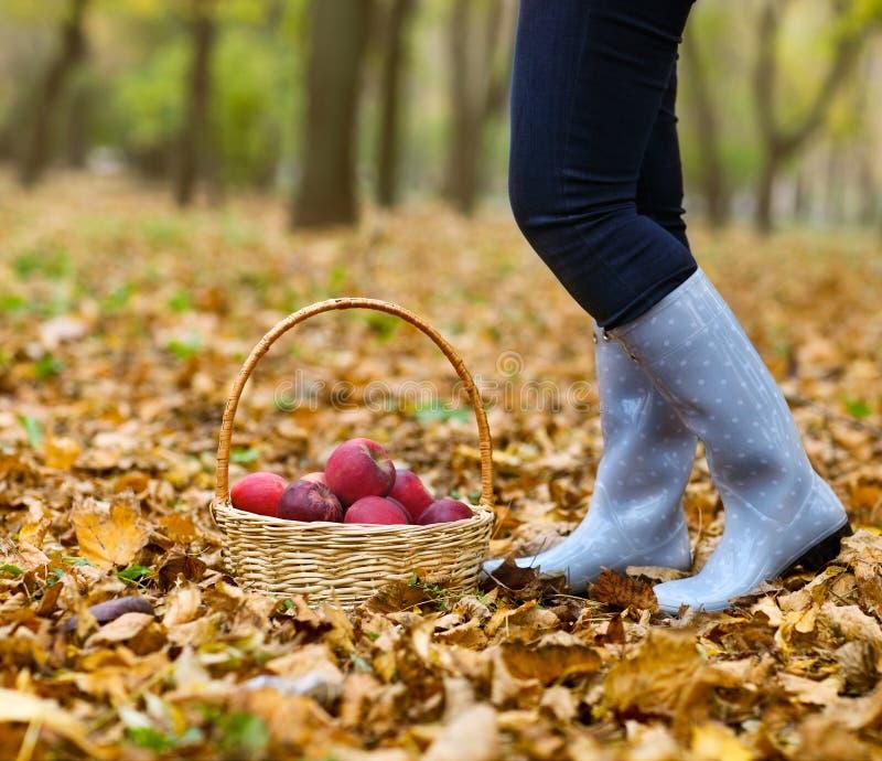 Страна осени - женщина при плетеная корзина жать яблоко стоковые фото