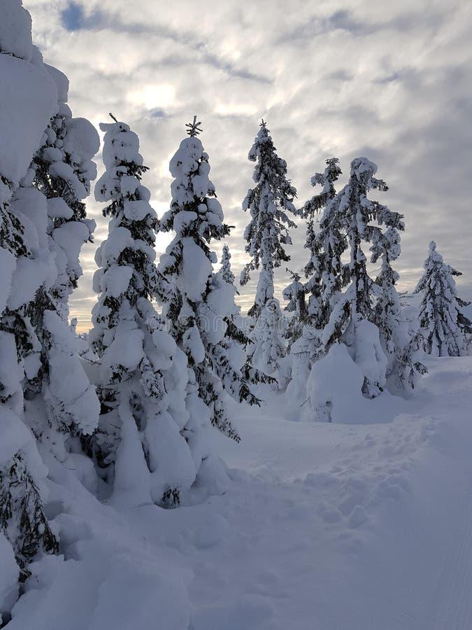 Страна чудес зимы облачное небо при славные деревья покрытые с снегом стоковые изображения
