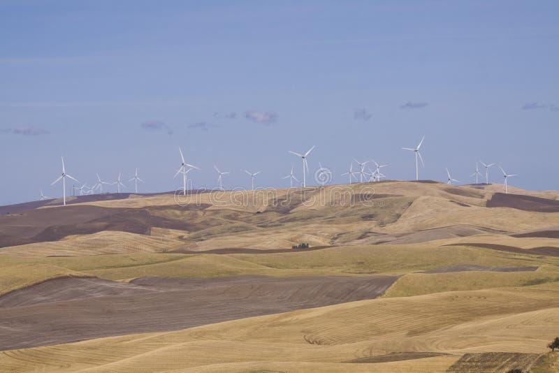 Страна Palouse в юговосточном штате Вашингтоне стоковые изображения rf