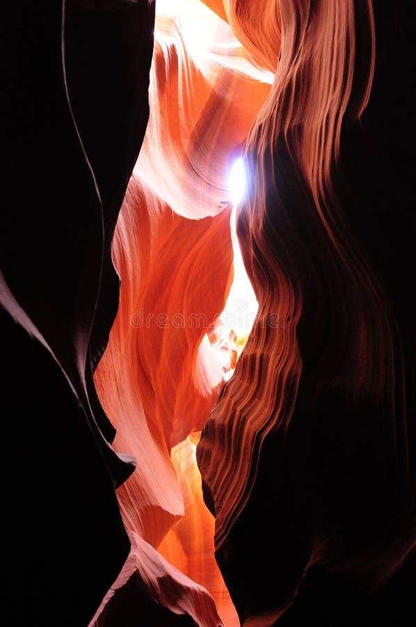 страница каньона Аризоны антилопы стоковое изображение rf