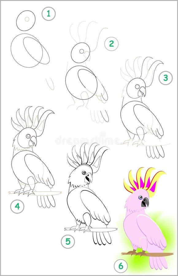 Страница показывает как выучить шаг за шагом нарисовать милый маленький попугая какаду Превращаясь искусства детей для рисовать и иллюстрация штока