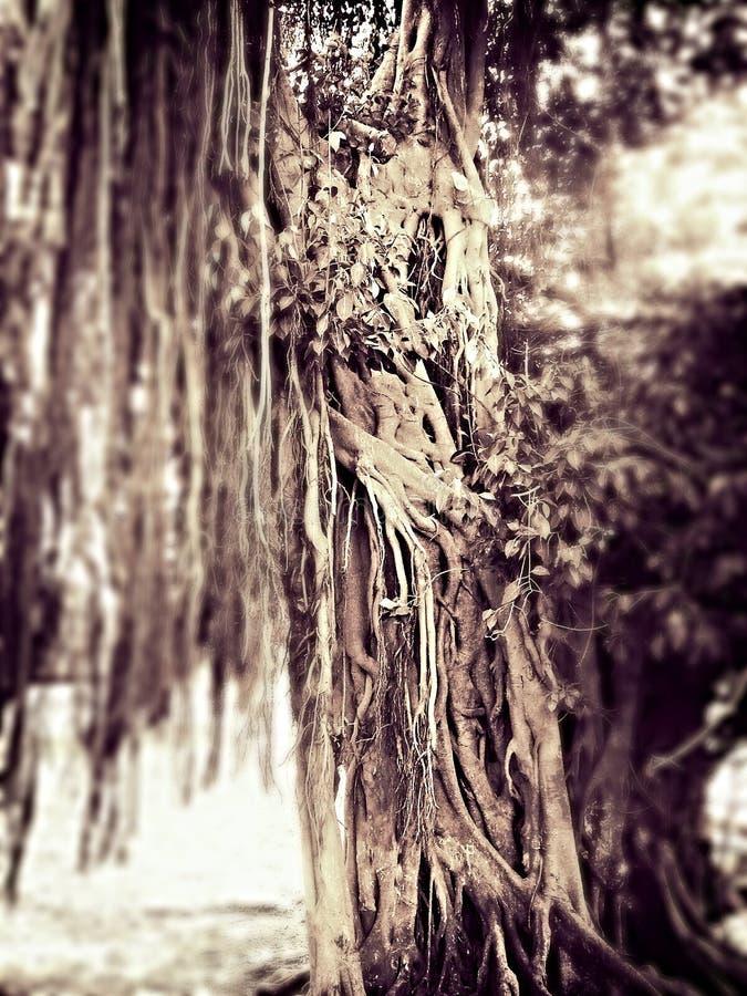 Странное дерево стоковые фотографии rf