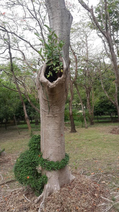 Странное дерево стоковое изображение rf