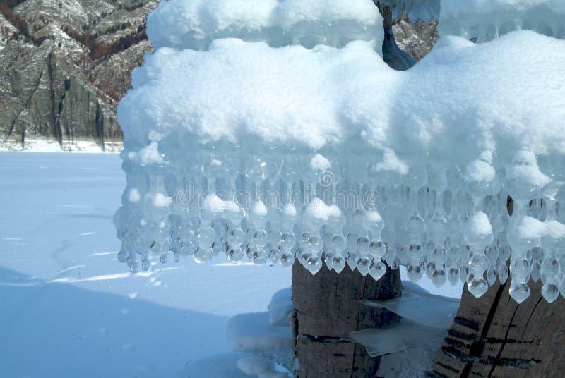Странные сосульки формы на дереве на озере стоковые изображения