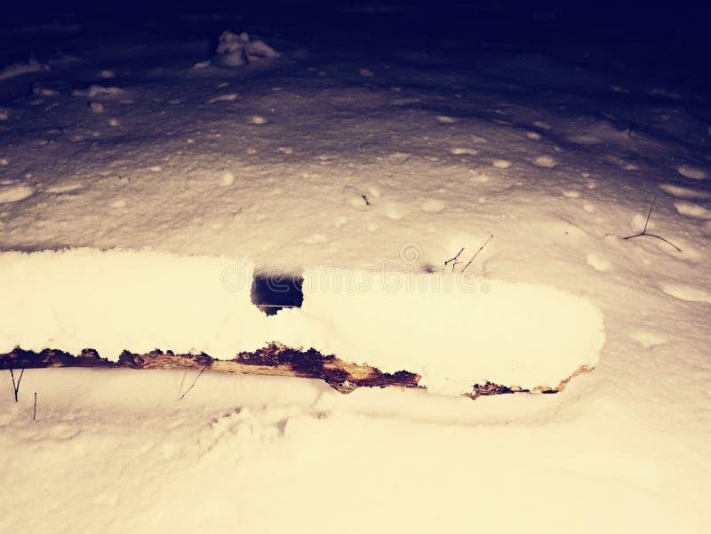 Страх ночи зимы Пугающая ноча в снежном лесе стоковое фото rf