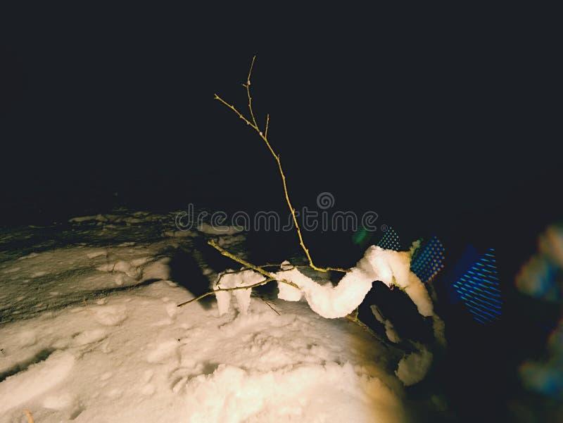 Страх ночи зимы Пугающая ноча в снежном лесе стоковые фото