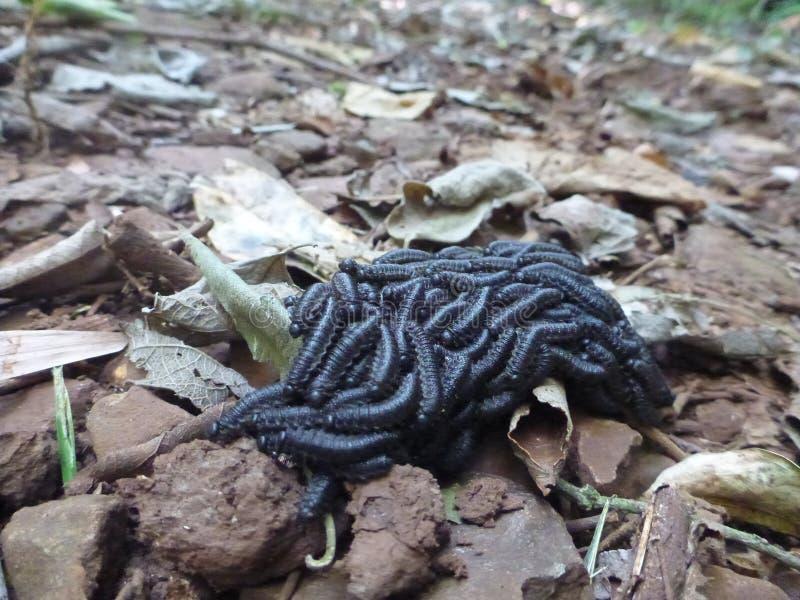 Страшное Crawlies, безопасность в номерах стоковая фотография rf