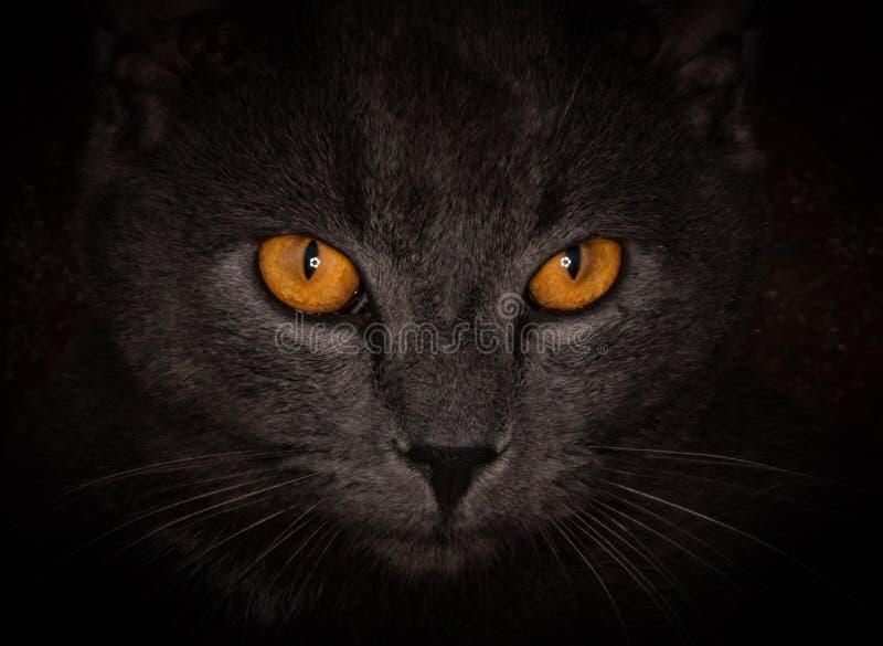 Страшные глаза кота стоковая фотография rf