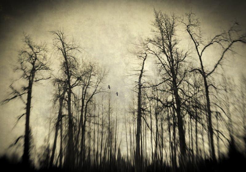 Страшные древесины зимы стоковое фото