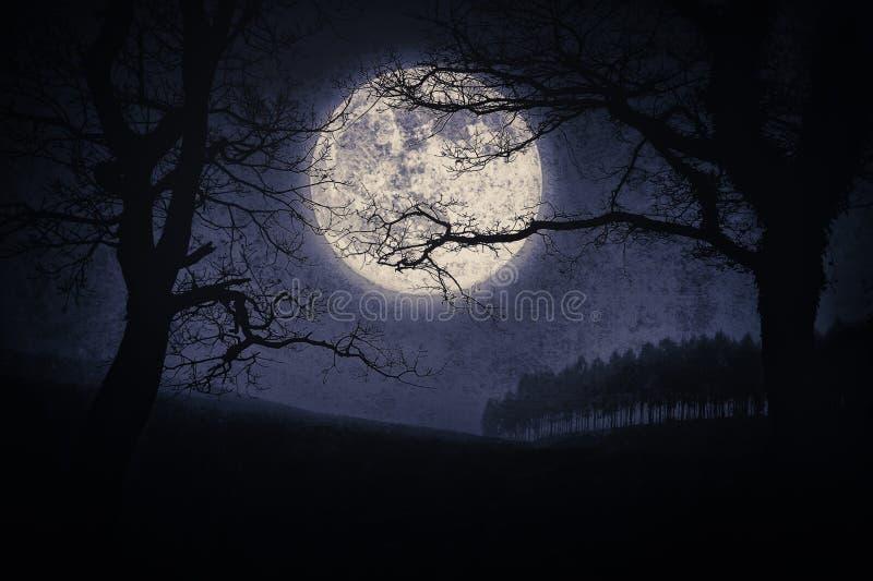 Страшный ландшафт хеллоуина на ноче с деревьями и полнолунием стоковая фотография rf