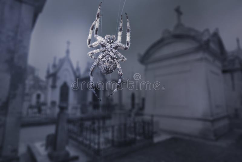 Страшный паук кладбища стоковые изображения
