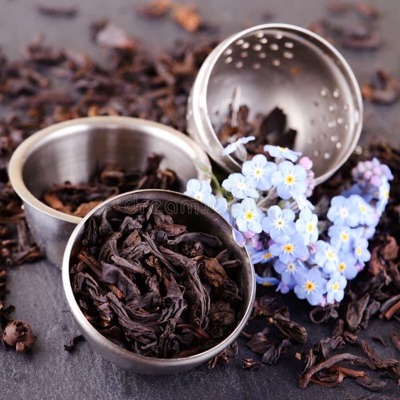 Стрейнер вполне листьев чая и голубого цветка на шифере стоковые фото