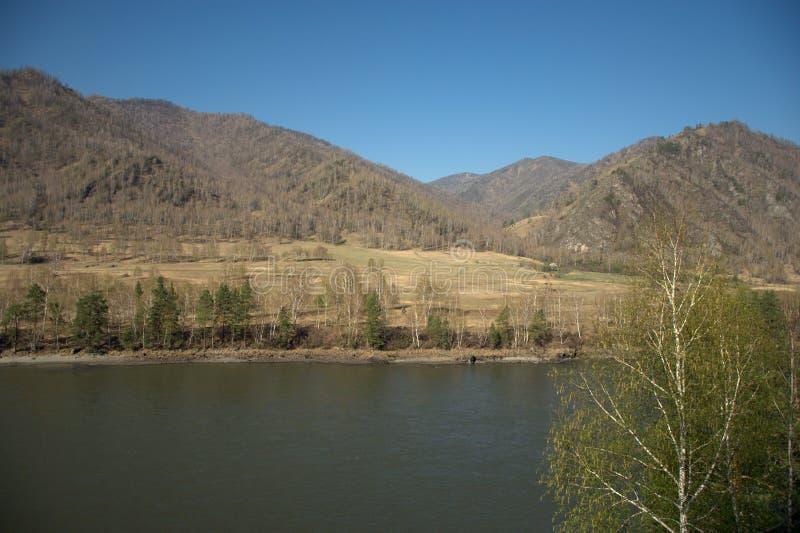 Стремительное река Katun носит свои воды бирюзы вдоль ноги гор Altai Gorny Altai, Сибирь, Россия E стоковая фотография