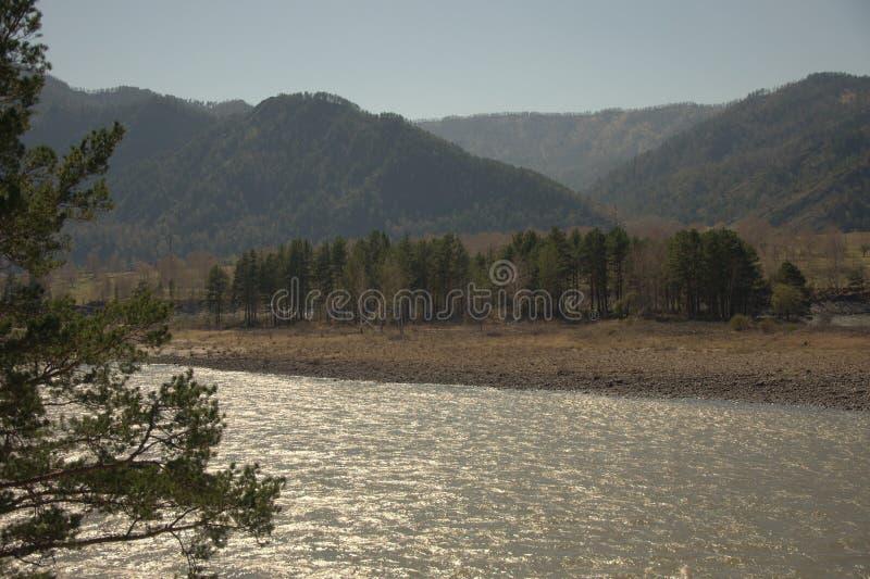 Стремительное река Katun носит свои воды бирюзы вдоль ноги гор Altai Gorny Altai, Сибирь, Россия стоковая фотография