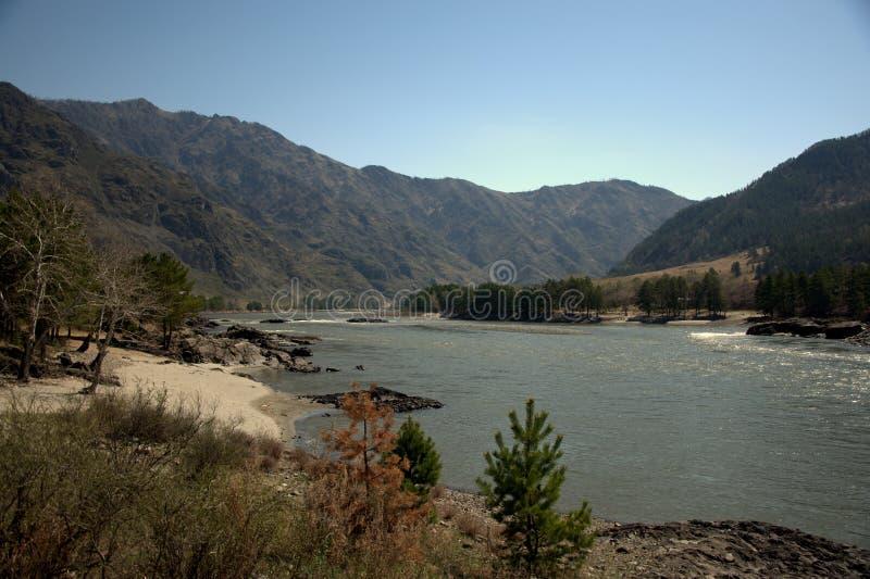 Стремительное река Katun носит свои воды бирюзы вдоль ноги гор Altai Gorny Altai, Сибирь, Россия E стоковое фото