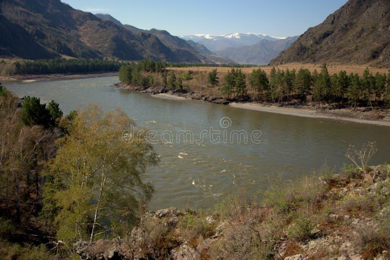 Стремительное река Katun носит свои воды бирюзы через горы Altai Сибирь, Altai, Россия стоковая фотография