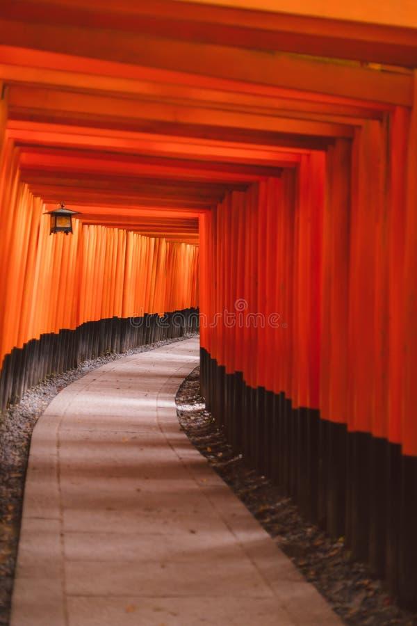 Стробы Fushimi Inari Taisha Torii стоковое фото rf