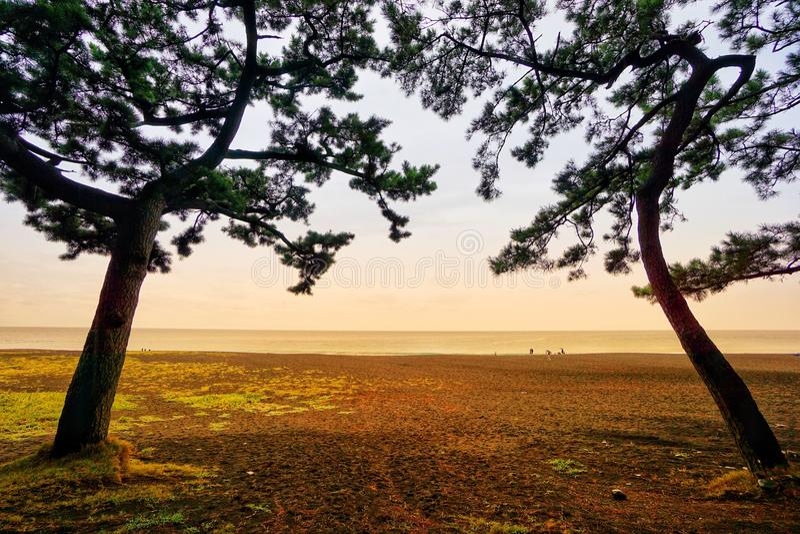 Строб дерева близнецов и пляж во времени захода солнца на Shizuoka, Японии стоковые изображения rf