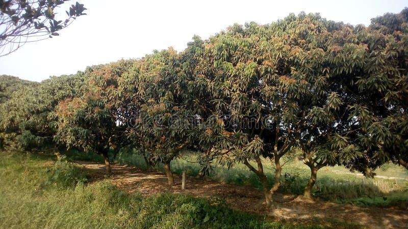 Строгая лес стоковая фотография