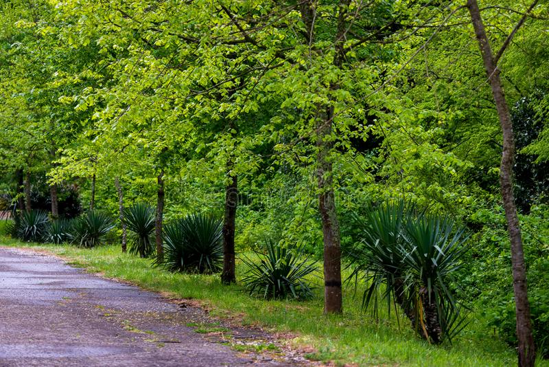 Строка вечнозеленых кустов и путь в красивом парке с геометрическими зелеными деревьями и тропами стоковая фотография rf