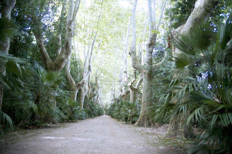 Строка деревьев стоковые фото