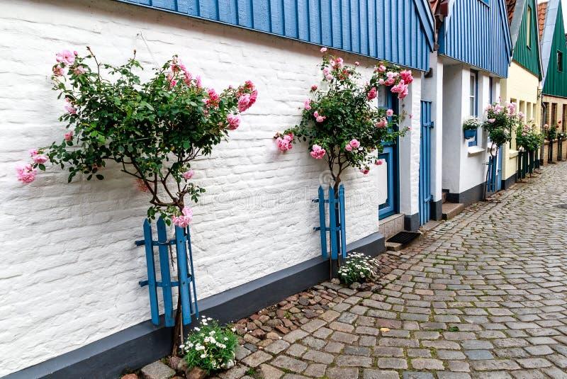 Строка живописных бывших рыбацких домиков с высокорослыми розовыми розами на стене дома в Holm рыбацкого поселка в Schleswig, сем стоковое изображение rf