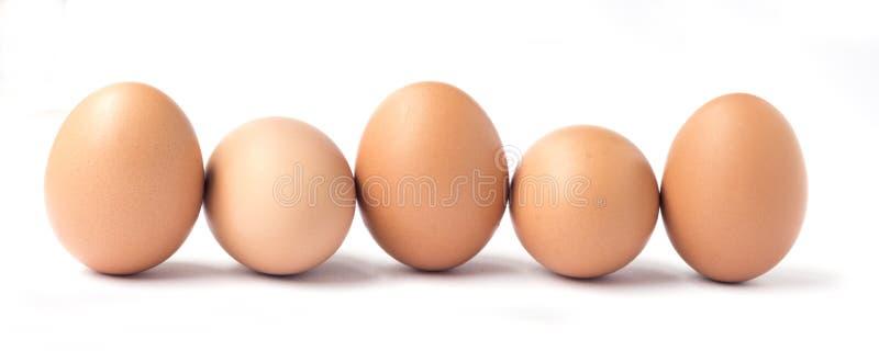 Строка 5 коричневых яичек цыпленка стоковое фото rf
