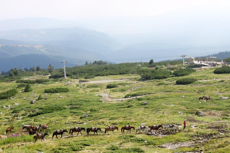 Строка лошадей высоких в горах стоковая фотография