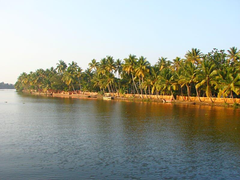 Строка пальм вдоль канала подпора в Керале, Индии - естественной предпосылке стоковое изображение