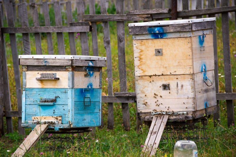 Строка пчелы hives в поле Beekeeper в поле цветков Крапивницы в пасеке при пчелы летая к посадке всходят на борт внутри стоковое фото rf