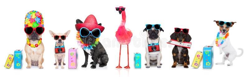 Строка собак на летних каникулах стоковое фото rf