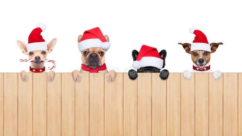 Строка собак Санта Клауса стоковые фото