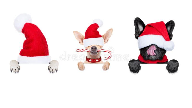 Строка собак Санта Клауса стоковая фотография