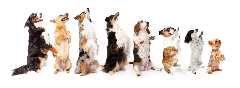 Строка собак сидя до бортовой умолять стоковое изображение rf
