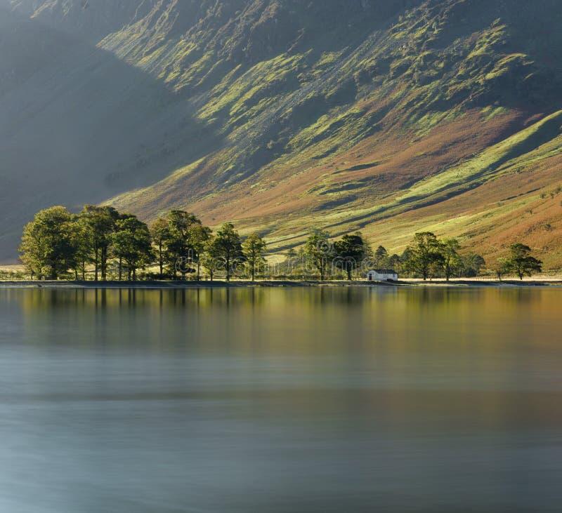 Строка сосен на береге озера стоковая фотография