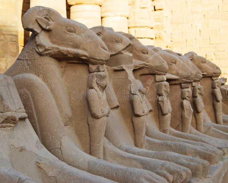 Строка статуй штосселя виска Karnak, Луксора, Египта стоковая фотография rf