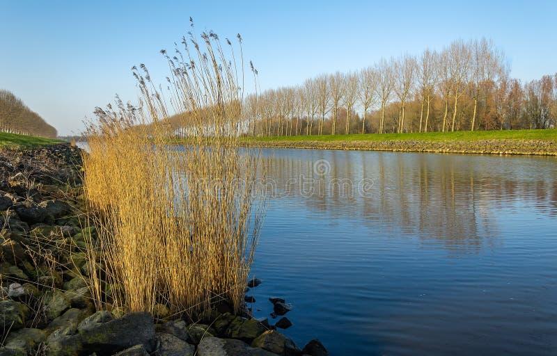 Строка чуть-чуть деревьев отразила в поверхности воды стоковые фото
