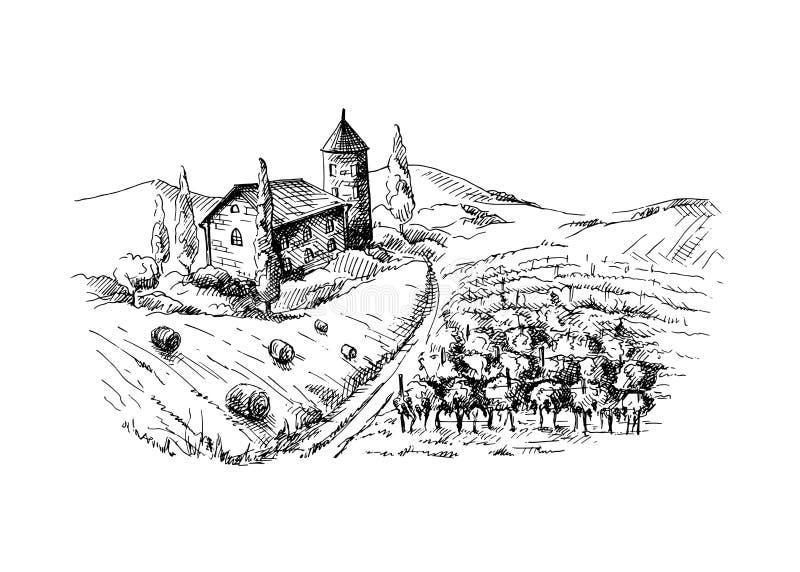 Строки заводов и замка виноградины виноградника бесплатная иллюстрация