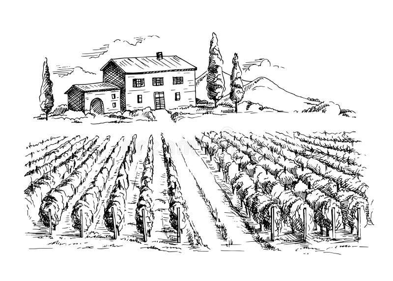 Строки заводов и дома виноградины виноградника бесплатная иллюстрация