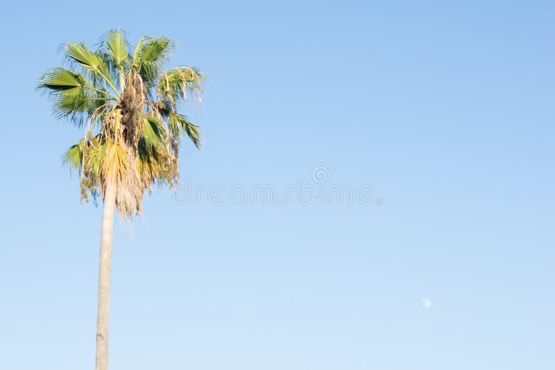 Строки пальмы захода солнца Калифорнии в Санта-Барбара Высокорослый, высокий стоковое фото rf