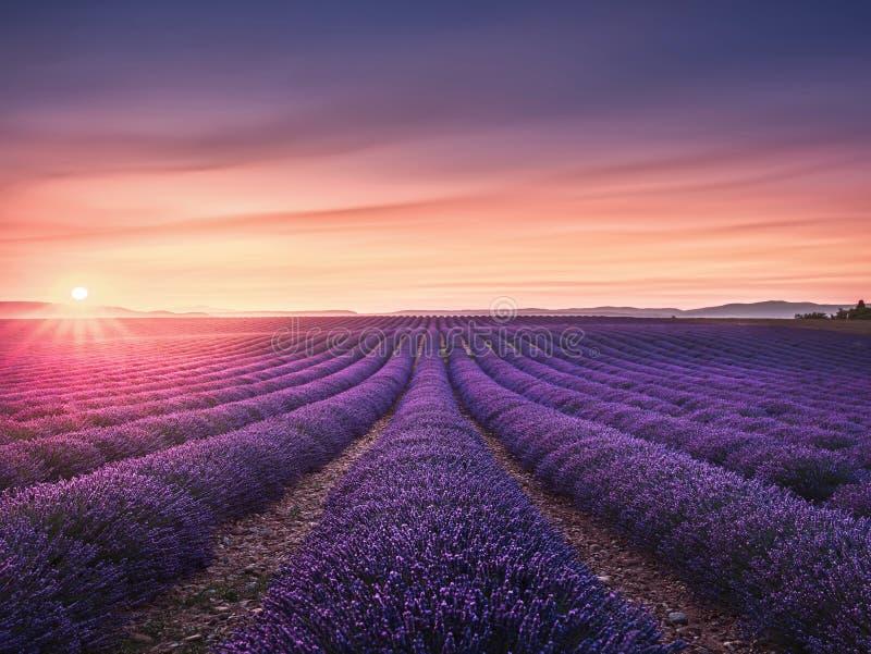 Строки полей цветка лаванды зацветая бесконечные на заходе солнца Valensol стоковое фото rf