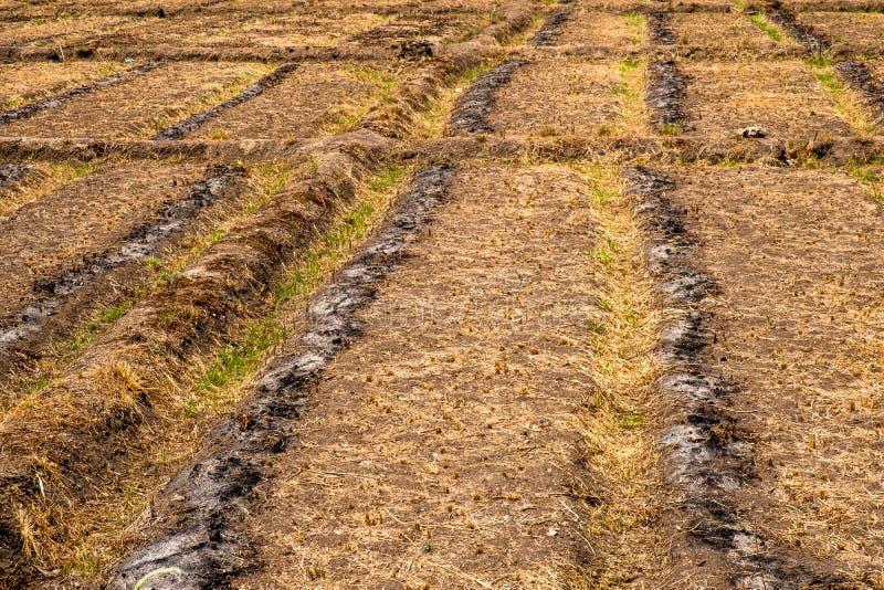 Строки пустого seedbed в сельской местности Чиангмая, Таиланда стоковые фотографии rf