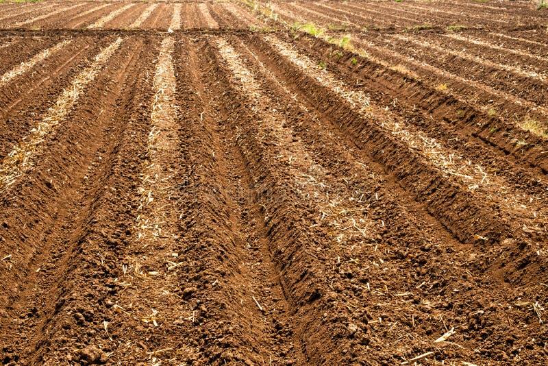 Строки пустого seedbed в сельской местности Чиангмая, Таиланда стоковые изображения rf