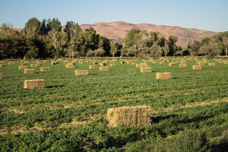 Строки связок сена стоковые фото