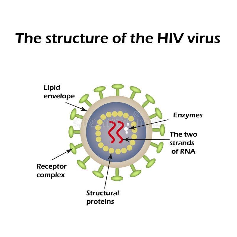 Структура вируса СПИДА ВИЧ также вектор иллюстрации притяжки corel бесплатная иллюстрация