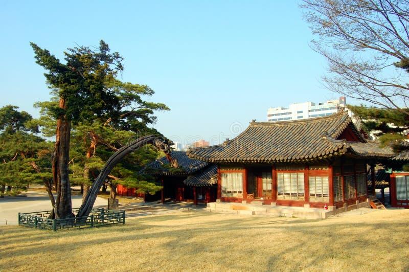 структура дворца changgyeonggung стоковые изображения