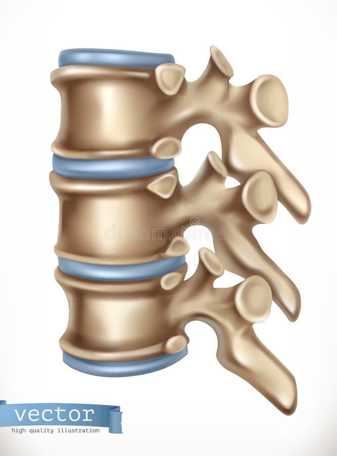 Структура позвоночника Человеческий скелет, медицина вектор 3d иллюстрация штока